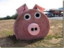 Hay roll pig