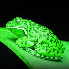 Go Green by Dianne Stephens-Miller - Animals Amphibians