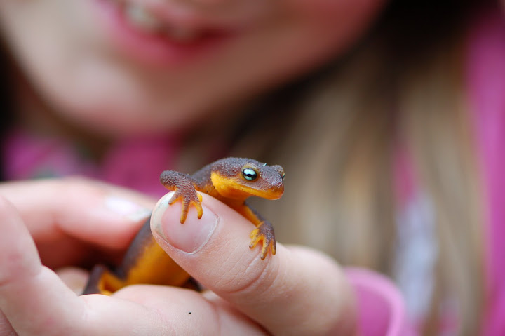 Girl with Salamander by Antony Wilson