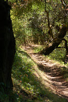 Windy Hill Open Space Preserve