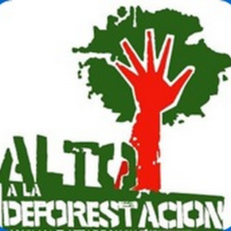 Día Internacional de la Preservación de los Bosques