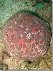 Dive Site 2_12 [1280x768]