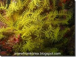Dive Site 3_14 [1280x768]