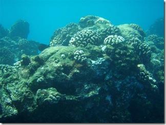 Maui Snorkeling_34 (Medium)