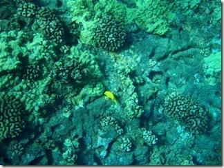Maui Snorkeling_15 (1) (Medium)