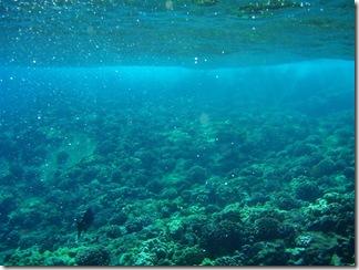 Maui Snorkeling_16 (1) (Medium)