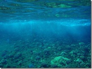 Maui Snorkeling_20 (1) (Medium)