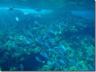 Maui Snorkeling_25 (1) (Medium)