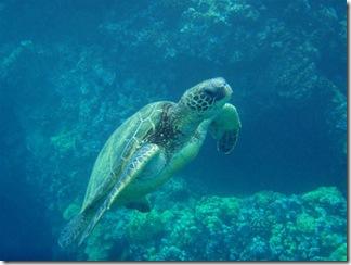 Maui Snorkeling_31 (Medium)