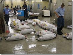 Tsukiji Fish Market_05 [1600x1200]