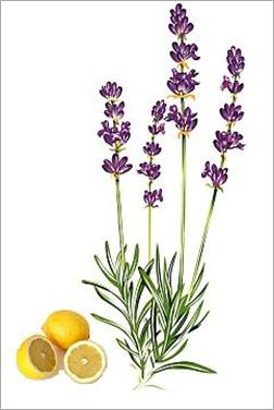 Opleiding Aromatherapie