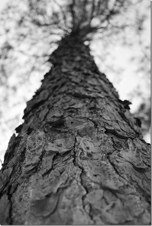 1tree
