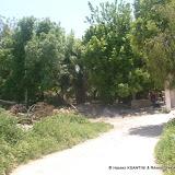 Saida a un nouveau jardin ! dans Environnement JardinOuedElOuakrif