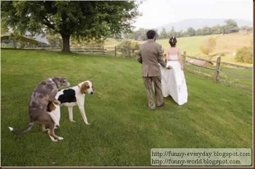 weddings (8)
