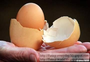 蛋包蛋 (1)