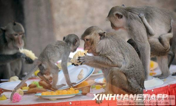 Monkey Festival (4)
