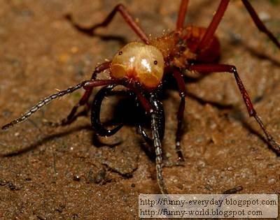 超暴力蟲蟲 (3)