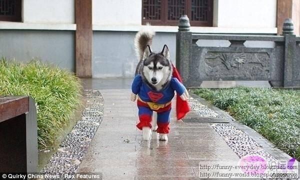 dog (9)