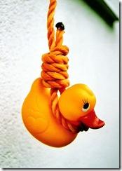 suicide duckie