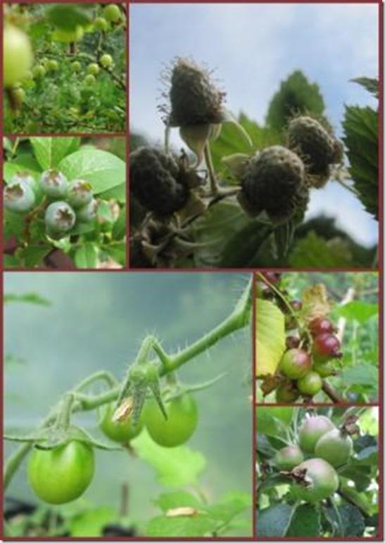 fruitfull garden web