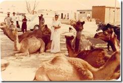 camels-pilani