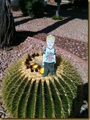 flatmarkcactus
