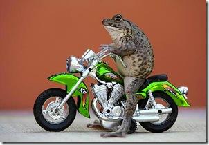 Ranocchio Motociclista