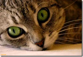 green-cat-eyes-1