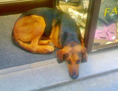 Michele il cane latin-lover