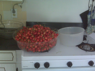 gathered cherries