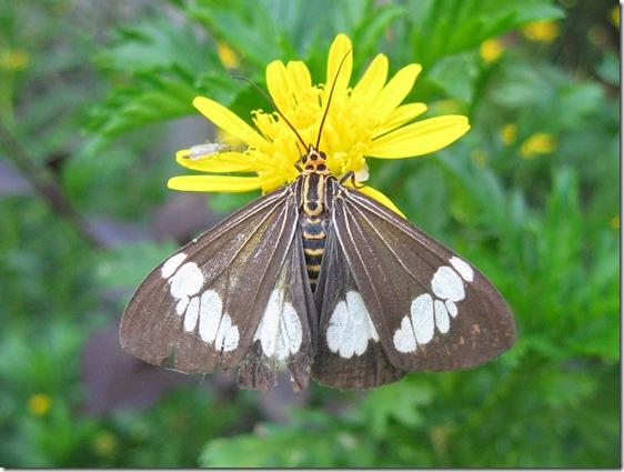 Buterfly 2