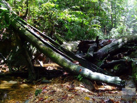 petrified_tree_trunks_across_stream