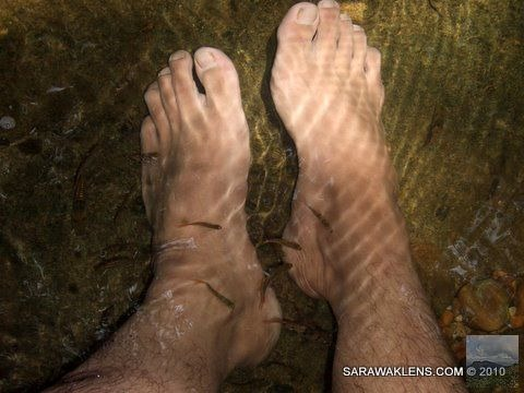 feet_in_water_natural_fish_foot_spa