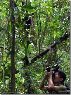 phalaenopsis orchid 7