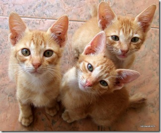 Three_Kittens