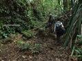 Teluk_Limau_trail_Bako_National_Park_23
