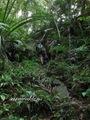 Teluk_Limau_trail_Bako_National_Park_25