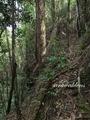 Teluk_Limau_trail_Bako_National_Park_40