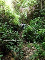 Teluk_Limau_trail_Bako_National_Park_56