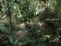 Teluk_Limau_trail_Bako_National_Park_63