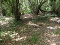 Teluk_Limau_trail_Bako_National_Park_67
