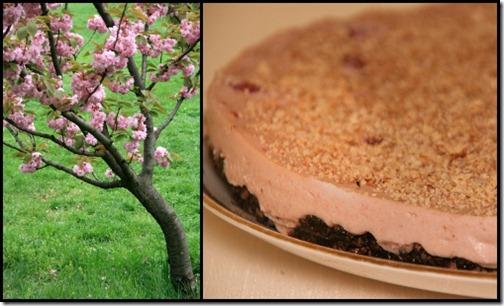 Cheesecake cu visine2