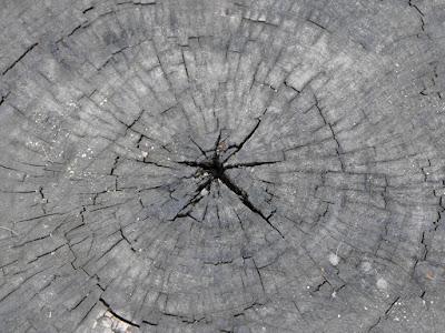 Copacul, buturuga si centrul lumii