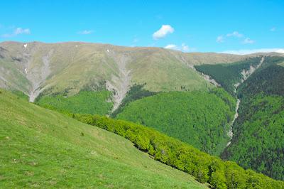 Poiana Narciselor - Valea Rea - Muntii Baiului