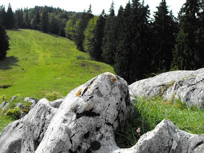 Piatra Craiului - Poiana Zanoaga