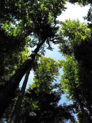 Piatra Craiului. Padurea. The Forest