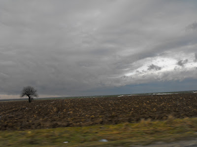 campia. copacul. anii. norii.