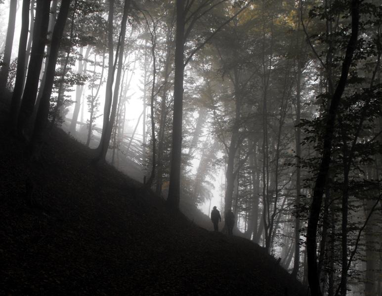 Muntii Trascaului. Padurea in ceata
