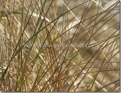 Strandgräsgardinfördjuöverstr