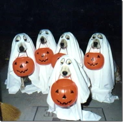 Ghostly-Dogs